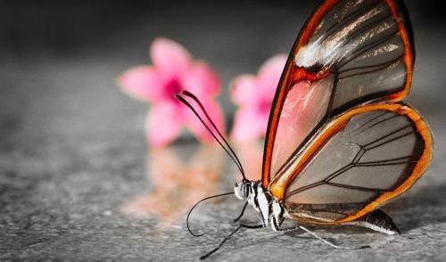 fotografias-de-insectos-34